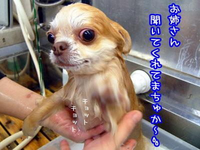 13_20090521022841.jpg