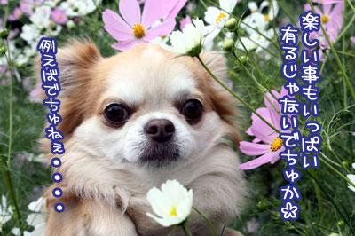 13_20091007161801.jpg
