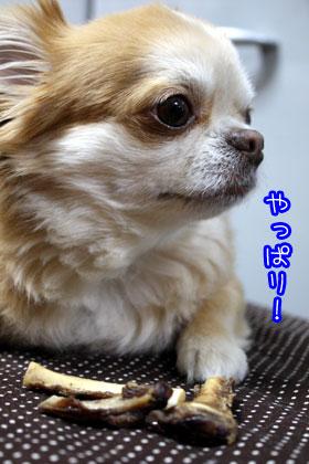 14_20090318164633.jpg
