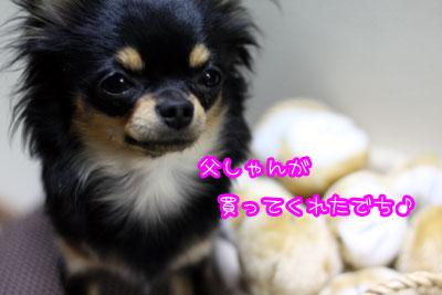 14_20090319163050.jpg
