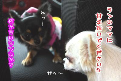 14_20090428132853.jpg