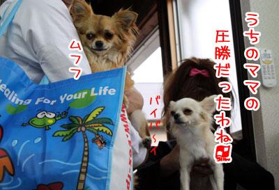 14_20090506232119.jpg