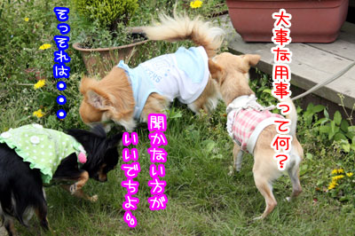 14_20090509025132.jpg