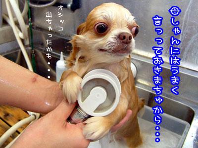 14_20090521022835.jpg