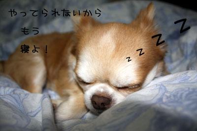 15_20090109203427.jpg