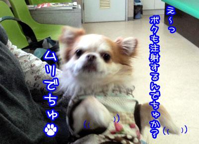 15_20090426224736.jpg