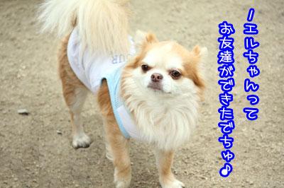 15_20090511171435.jpg