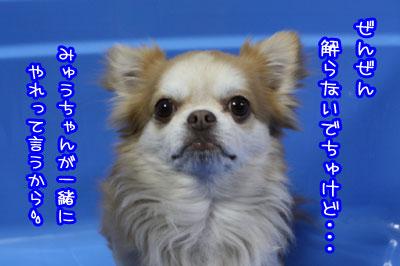15_20090518233338.jpg