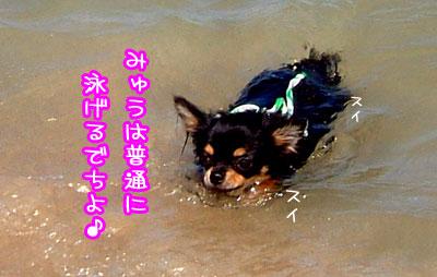 15_20090524040356.jpg