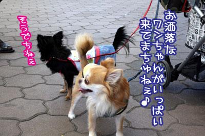 15_20091007162249.jpg