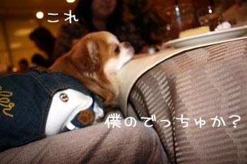 16_20081224031839.jpg