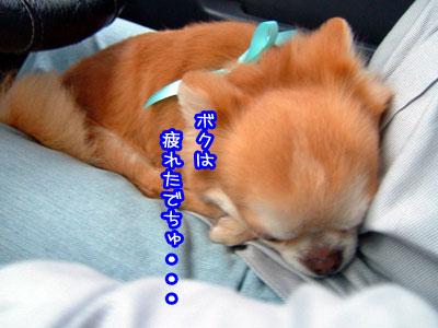 16_20090521023114.jpg