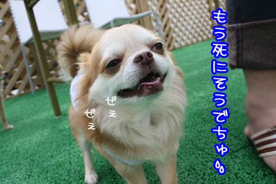 16_20090707152043.jpg