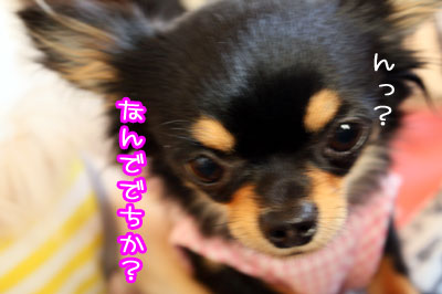 17_20090515211242.jpg