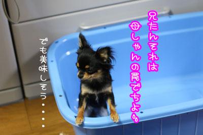 17_20090518235922.jpg