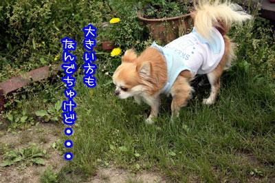 18_20090509234337.jpg
