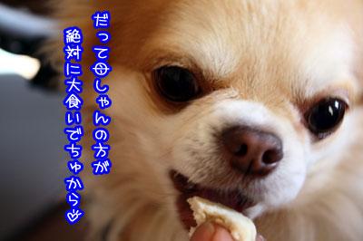18_20090515211251.jpg
