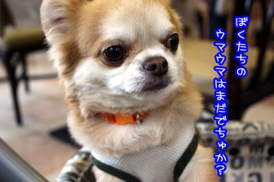 18_20090531145625.jpg