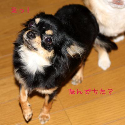 19_20090113021755.jpg