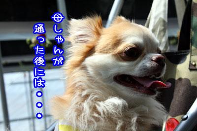 19_20090514061756.jpg