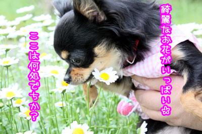 19_20090515210026.jpg