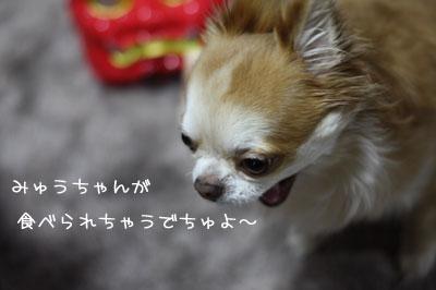 1_20090206001009.jpg