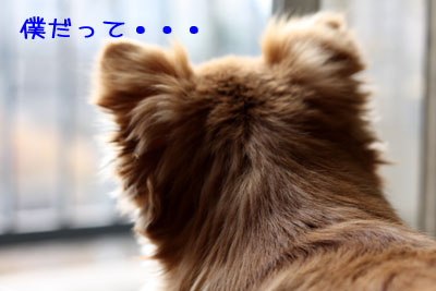 22_20090119034459.jpg