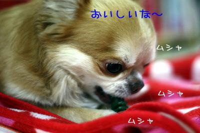 22_20090121035411.jpg