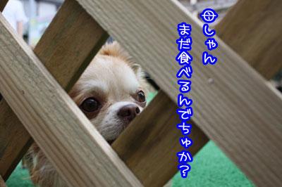 22_20090707164414.jpg