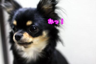 23_20090319163138.jpg