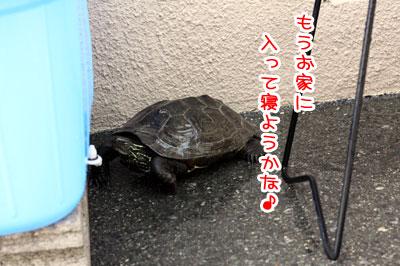 23_20090519085416.jpg