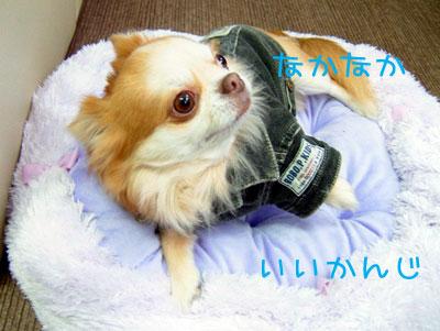 2_20081201191055.jpg