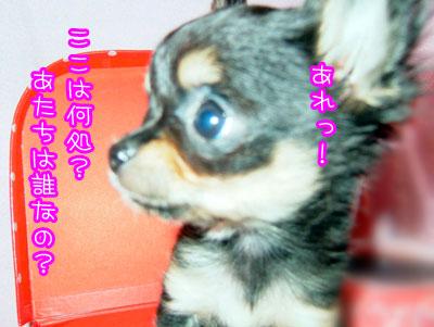 30_20090223161247.jpg
