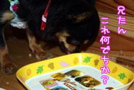 31_20090419114236.jpg