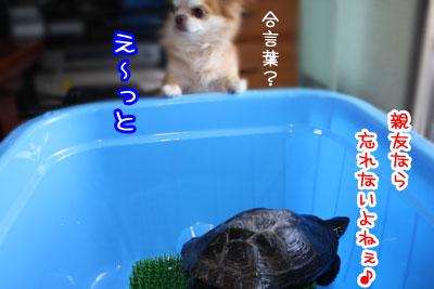 31_20090519000138.jpg