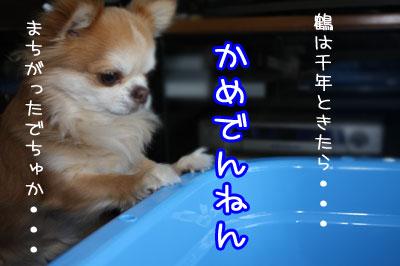 32_20090519000148.jpg