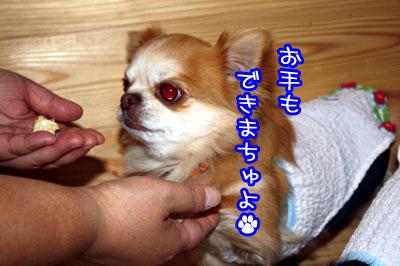 35_20090419115025.jpg