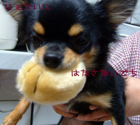 3_20081126181939.jpg