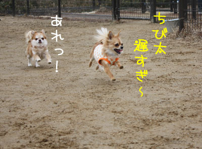 3_20090205015719.jpg