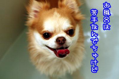 43_20090419115314.jpg