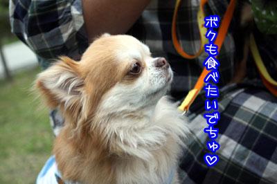 45_20090513012805.jpg