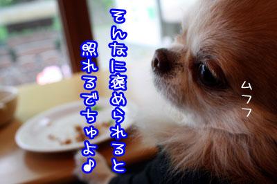 46_20090428194345.jpg