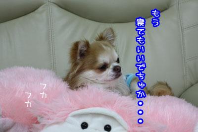47_20090506232455.jpg
