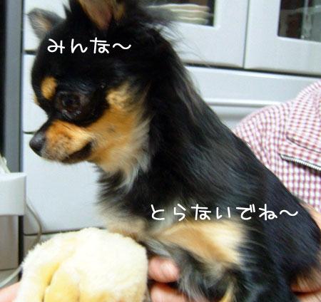 4_20081126181948.jpg