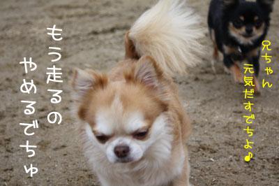 4_20090205020205.jpg