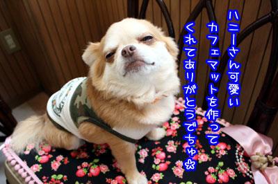 50_20090531172605.jpg