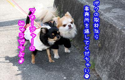 51_20090509121354.jpg