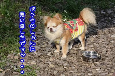 51_20090518004359.jpg