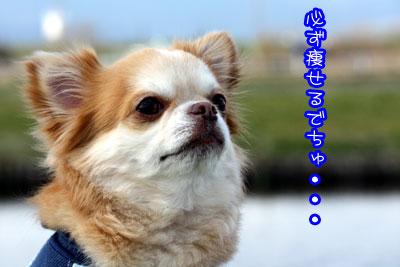 53_20090317113454.jpg