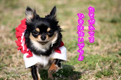 54_20090317113506.jpg